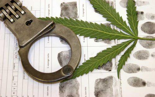 kim ogg marijuana policy