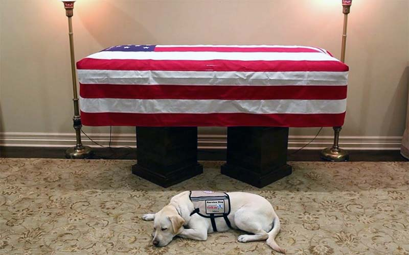 George HW Bush's service dog yellow lab Sully mourning goes viral